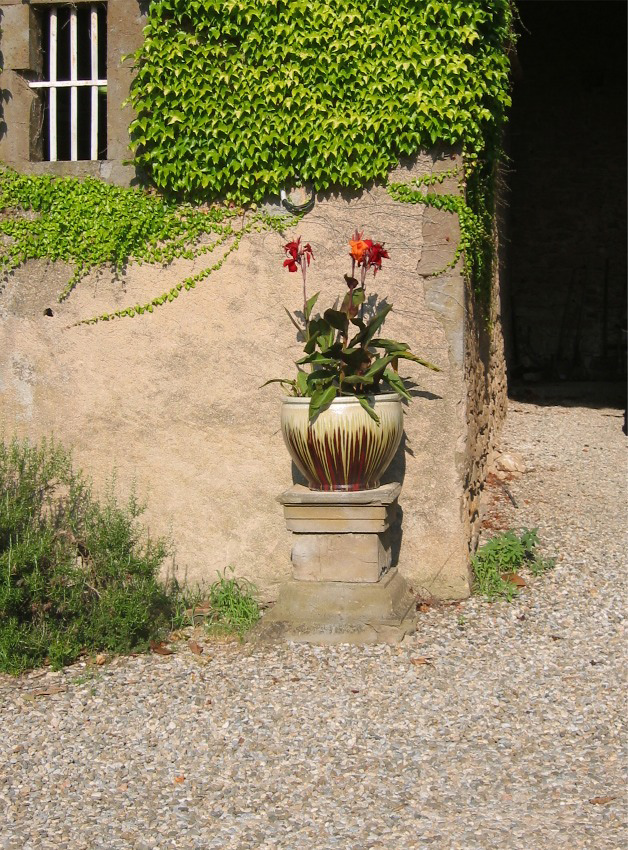 Courtyard flowers at Domaine de Barthe